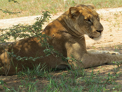 17 Days Uganda Safaris