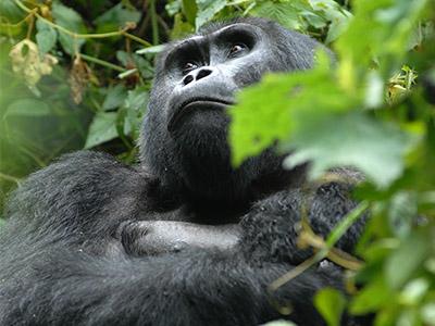 16 Days Uganda Rwanda Safari