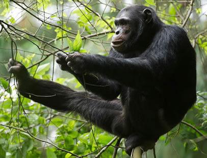 7 Days  Primates adventure
