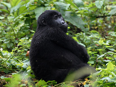 8 Days Rwanda Wildlife & Birding