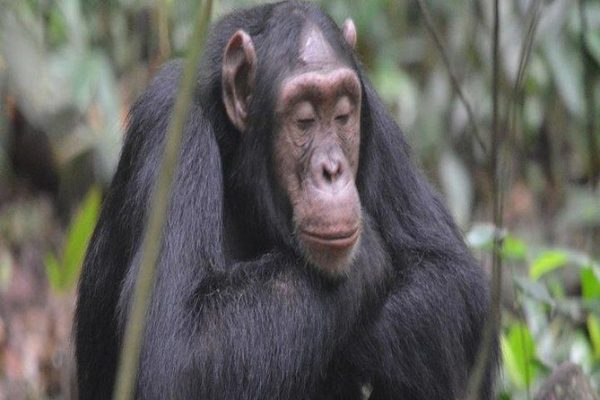 9 Days Rwanda Gorilla safari and  Wildlife tour