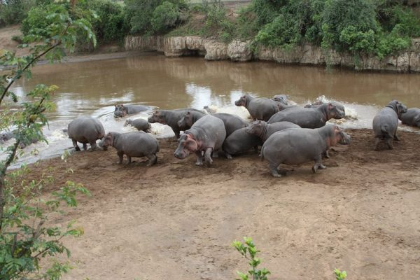 10 Day Highlights of Kenya wildlife safari - Comfort