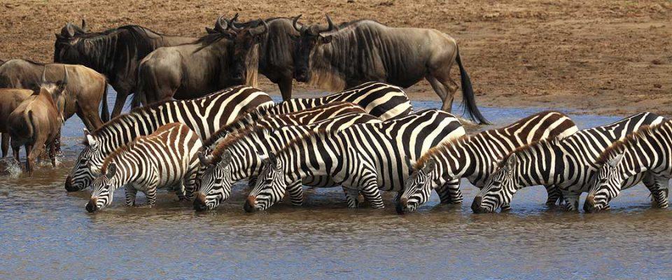 8 Days magical wildlife Kenya safari