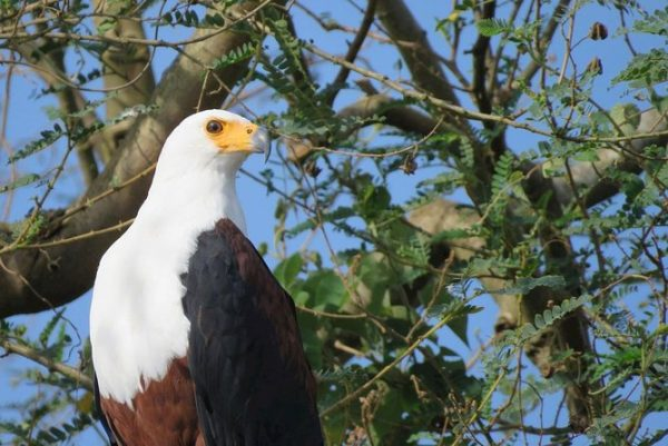 Is Bwindi national park safe for birding