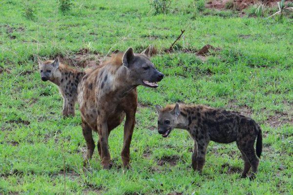 3 Days Magical Camping Selous National Park - Tanzania