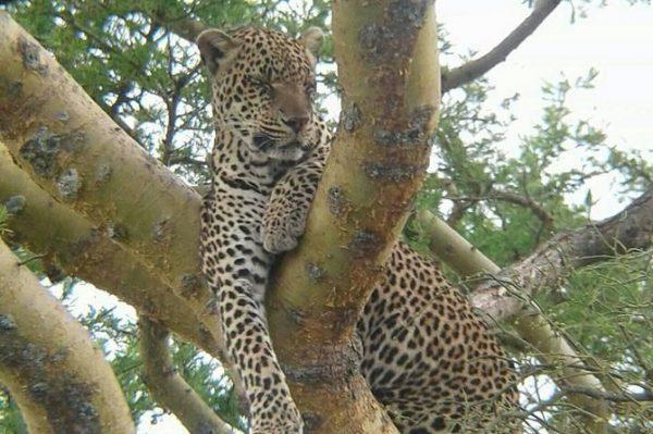 9 Day Exhilarating Semi Luxury Safari, Kenya safari holidays, wildlife tour
