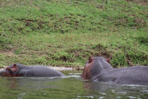 5 Days Uganda Gorilla Trekking and Queen Elizabeth safari