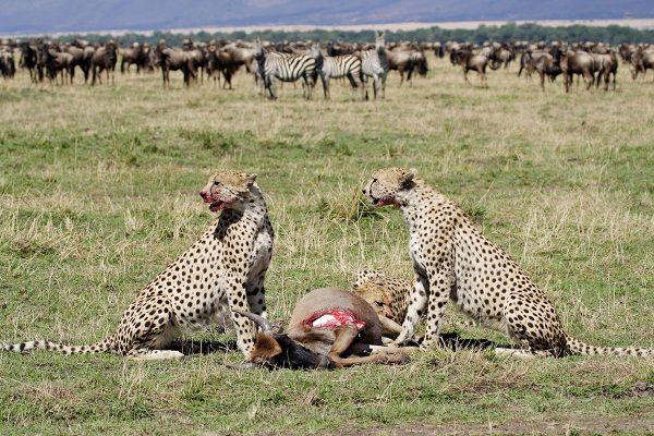 6 Day Magical Private Manyara, Serengeti, Ngorongoro & Tarangire Wildlife Safari