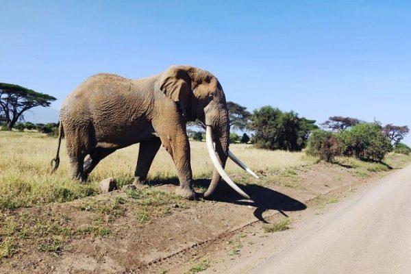 5 Day Explore Amboseli - Lake Nakuru Kenya wildlife Safari