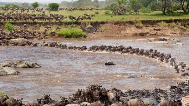 3 Day Masai Mara fly in Luxury safari