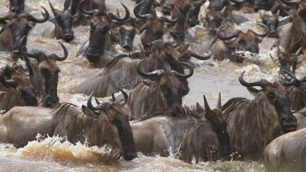 6 Days Serengeti and Uganda Gorilla tracking