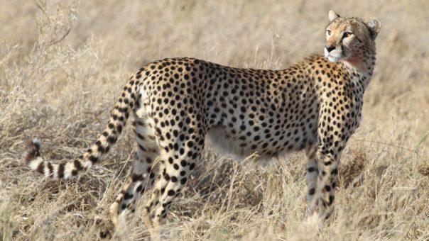 6 Days Serengeti and Rwanda Gorilla tracking