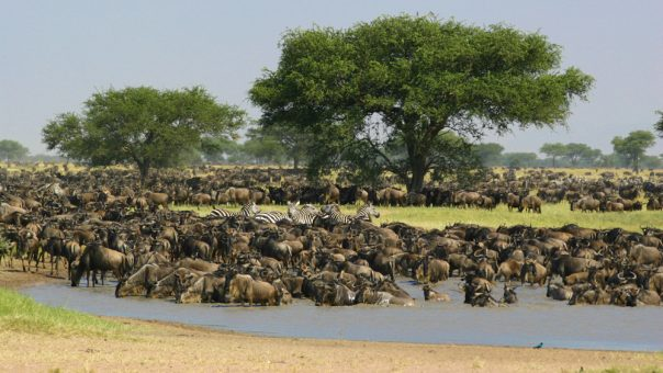 4 Days Northern Circuit Wildlife Safari - Tanzania