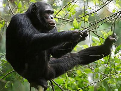 4 Days Rwanda Chimpanzee Tracking