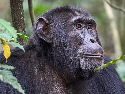 9 Days Tree Lions, Wildlife and Chimpanzee Tour