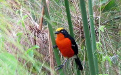 15 Days Uganda Birding safari