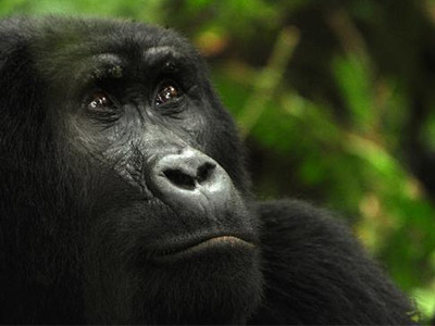 9 Days Rwanda Gorillas and Wildlife