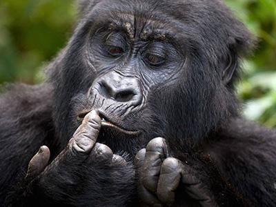 9 Days Rwanda Wildlife