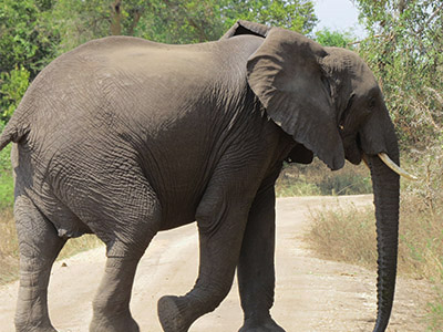 12 Days Uganda Wildlife safari Tour