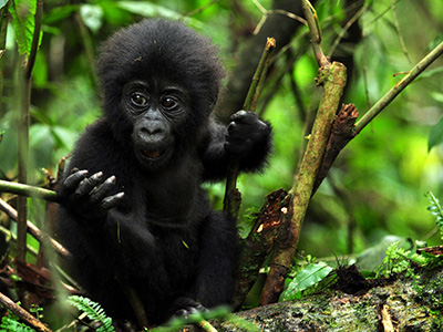 5 Days Rwanda Wildlife Safari