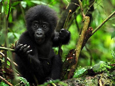 5 Days Rwanda Wildlife Safari