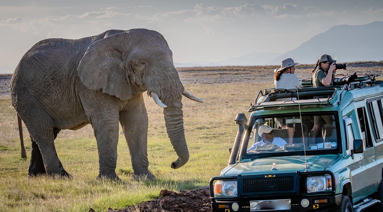 Wildlife Game Drives